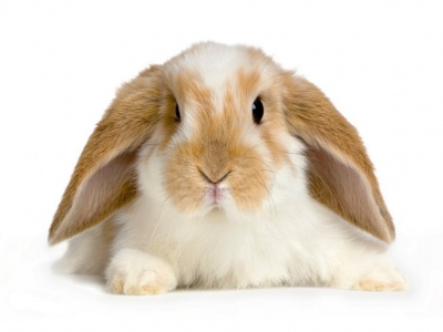 Pata de terciopelo el placer de ser yo - Casas para conejos enanos ...
